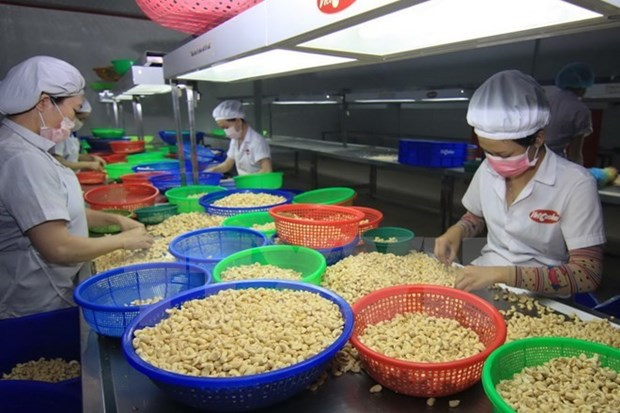 WTO Director-General: Vietnam is on the right path hinh anh 1