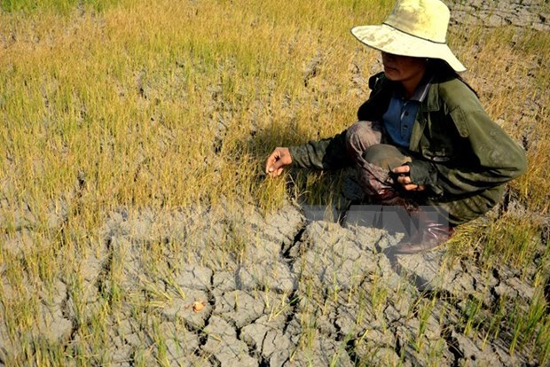 Drought-hit localities supported to address consequences hinh anh 1