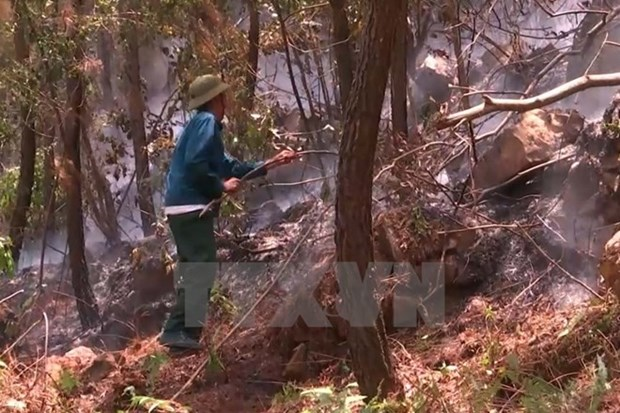 Forest fire warning on high level in many localities hinh anh 1