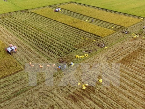 Vietnam's agriculture to profit from TPP: Argentine paper hinh anh 1