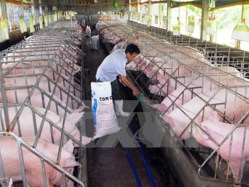 Project on safer breeding launched hinh anh 1