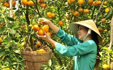 Thanh Hoa: women active in new-style rural area building hinh anh 1