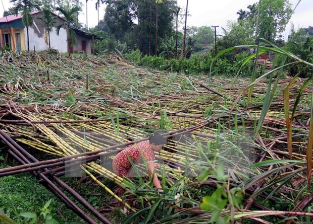 Mountainous provinces suffer from extreme weather events hinh anh 1