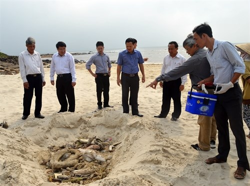 Authorities investigate mass fish kills in coastal provinces hinh anh 1