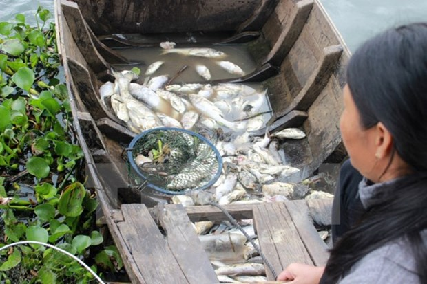 More efforts put in search of cause of mass fish death hinh anh 1