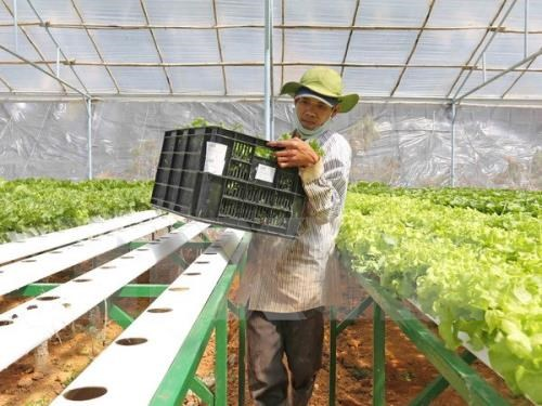 Quang Ninh appeals for investment in agriculture hinh anh 1