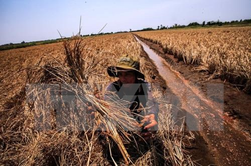 Drought causes 400 mln USD losses hinh anh 1