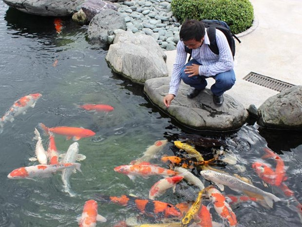 HCM City eyes 50 million USD in ornamental fish exports hinh anh 1