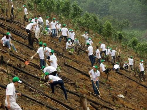 Honda plants 80 hectares of forest in Bac Kan hinh anh 1