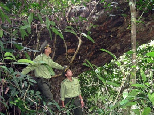 Nature preservation in Central, Central Highlands needs overhaul hinh anh 1