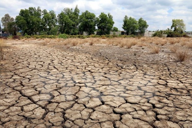 Organisations support farmers affected by drought hinh anh 1