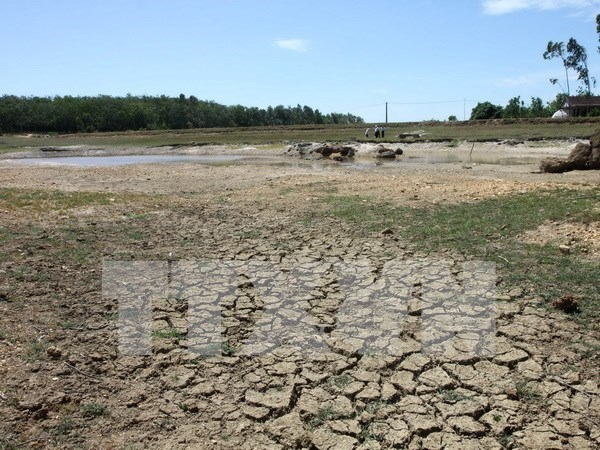 Farmers supported to cope with drought hinh anh 1