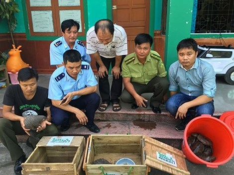 Pangolin smugglers to face up to 15 years in jail hinh anh 1