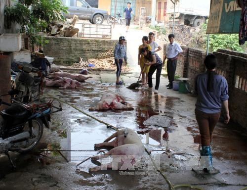 Ho Chi Minh City to clear out substandard slaughterhouses hinh anh 1