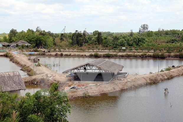 Natural disasters wreck havoc on aquaculture in Ca Mau hinh anh 1
