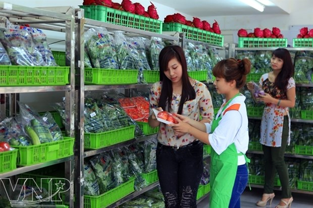 Safe vegetable growing area swells in HCM City hinh anh 1