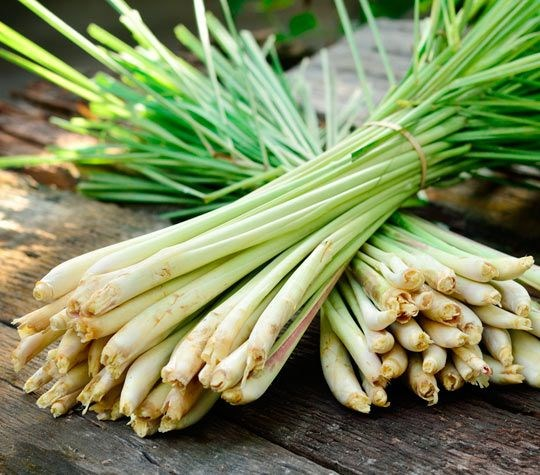 Delta farmers make profit from lemongrass hinh anh 1