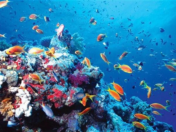Marine biodiversity conservation needs master plan hinh anh 1