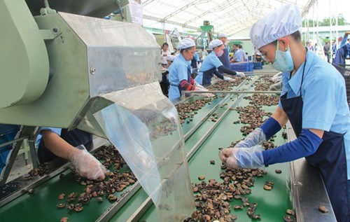 Vietnam to import 450,000 tonnes of raw cashew nut hinh anh 1