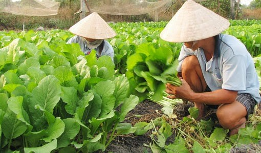 Central Highlands looks to vegetables, fruit trees amid water shortage hinh anh 1