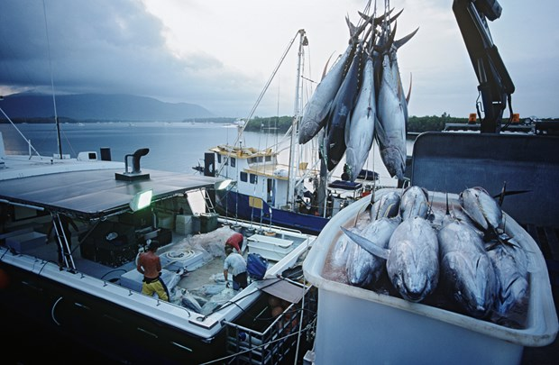 Indonesia bans foreign investment in fishing business hinh anh 1