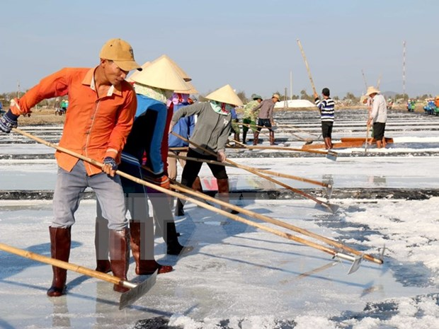 Embattled salt farmers in Quang Ngai Province aided hinh anh 1