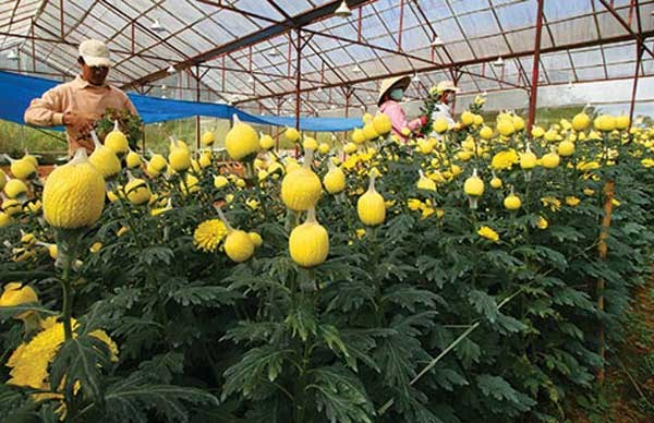 Agricultural businesses set to increase by 10 percent each year hinh anh 1