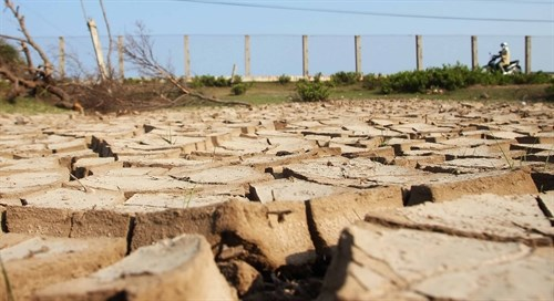 Mekong Delta drought losses total 215 million USD hinh anh 1
