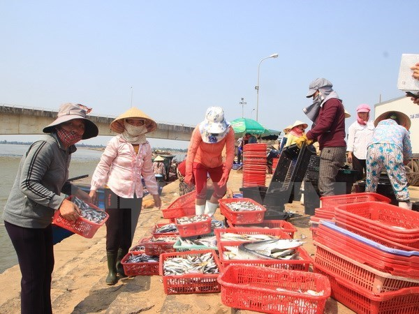 Ha Tinh offers temporary support to residents hit by mass fish deaths hinh anh 1
