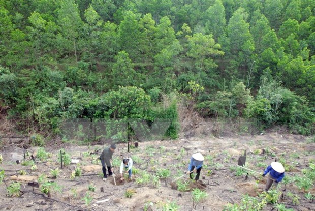 Dak Lak works to reclaim illegally occupied forest land hinh anh 1