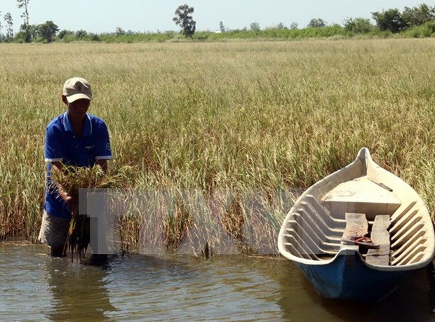 ADB helps Vietnam fight drought, saline intrusion hinh anh 1