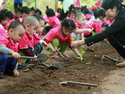 Pre-school education for 2016-2017 planned hinh anh 1