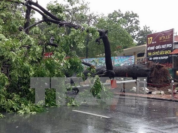 Typhoon causes havoc in northern localities hinh anh 1