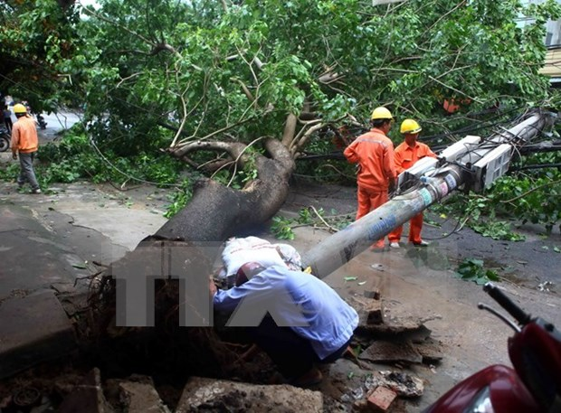 Northern localities surmount disaster consequences hinh anh 1
