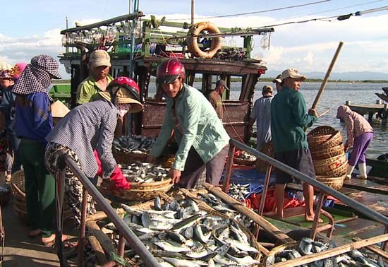 Sea pollution-affected fishermen in Thua Thien-Hue get support hinh anh 1