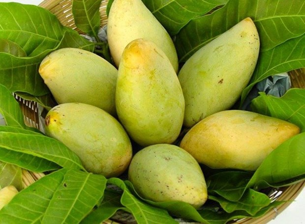 US to open door for Vietnamese mangoes hinh anh 1