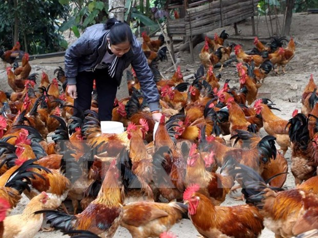 Poland exporters eye Vietnam poultry market hinh anh 1