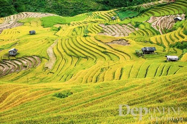 Cultural week of Mu Cang Chai terraced field opens hinh anh 1