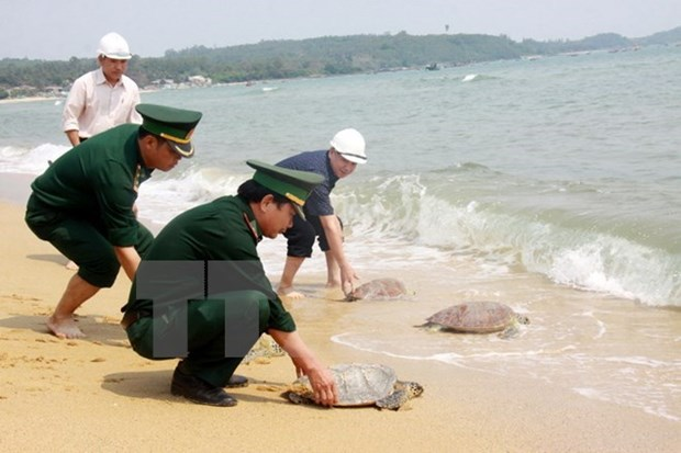 Tay Ninh seizes 66 turtles smuggled from Cambodia hinh anh 1