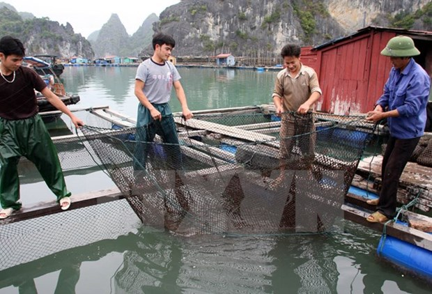 Seafood farming needs technological reform hinh anh 1