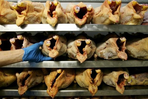 Probe into cheap US chicken conducted hinh anh 1