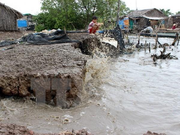 Salt intrusion threatens livelihoods in Ca Mau hinh anh 1