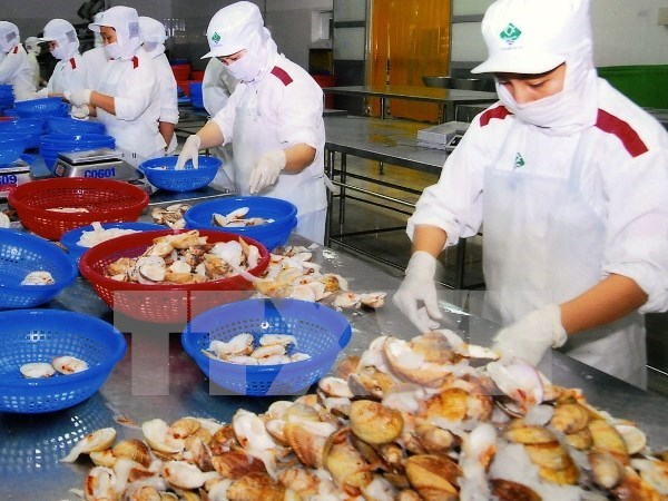 Farming bivalve molluscs for export favourable in Vietnam hinh anh 1