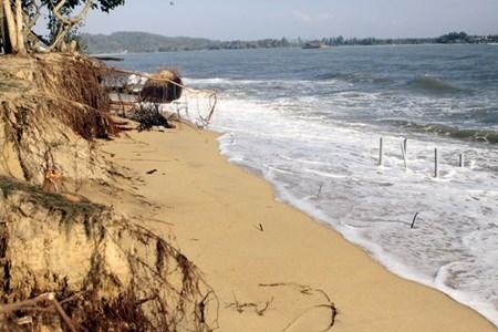 Sand overexploitation, deforestation worsen coastal erosion: expert hinh anh 1