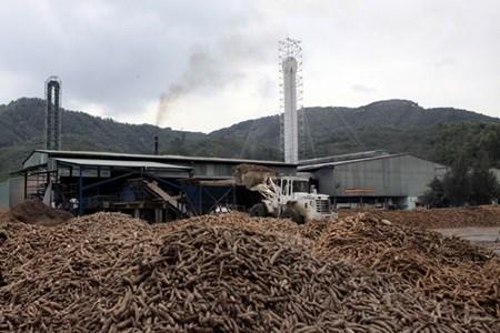 Export tax on sliced cassava cut hinh anh 1