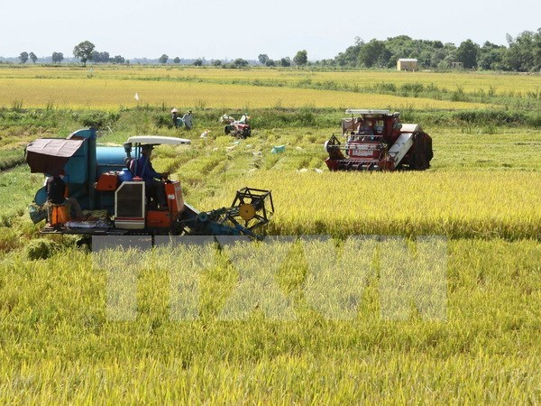 Mekong Delta seeks climate change adaptive techniques for rice farming hinh anh 1