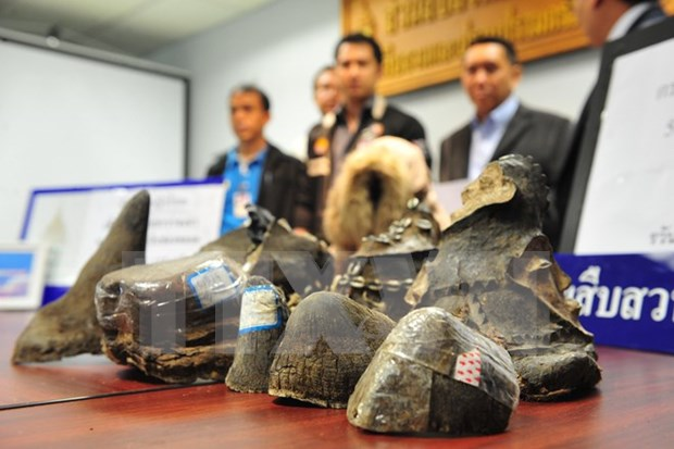 Customs sector calls for joint efforts against wildlife trafficking hinh anh 1