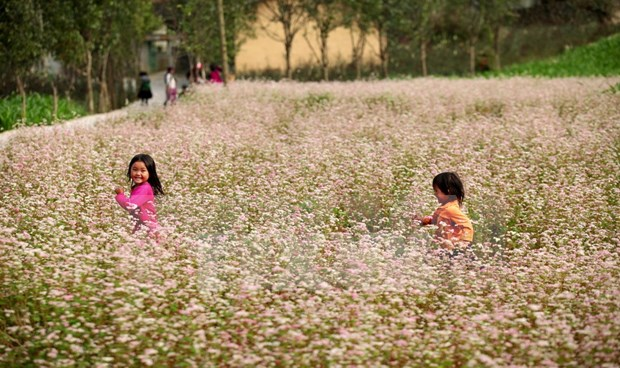 First Tam Giac Mach flower festival to be held in Ha Giang hinh anh 1