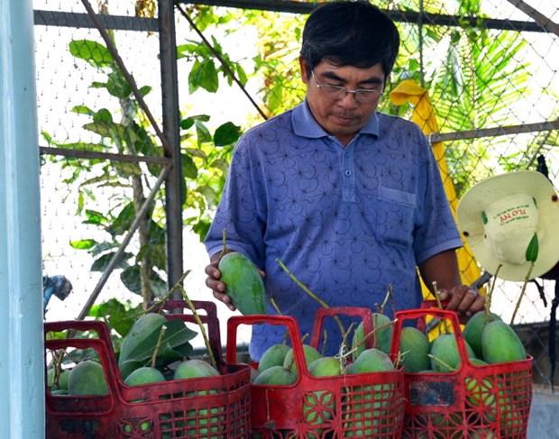 Japan helps boost Dong Nai's mangoes export hinh anh 1