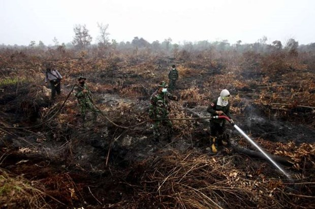 Indonesia deploys 25 aircraft to put out forest fires hinh anh 1